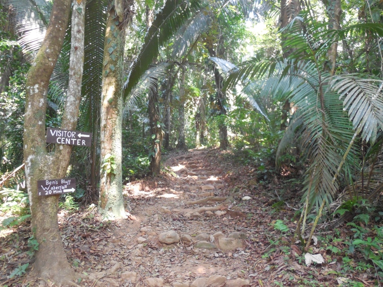 path through the jungle- nature reserve Travellingminstrel #13