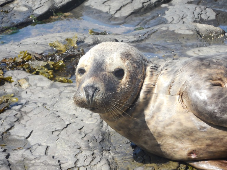 Injured seal - Travellingminstrel #