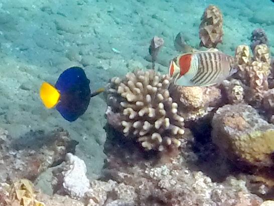 fish - Travellingminstrel #