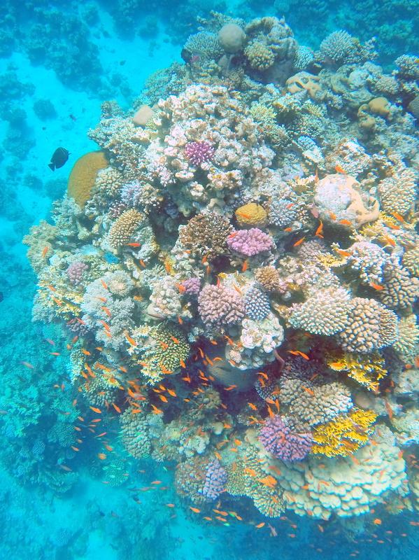 coral - Travellingminstrel #