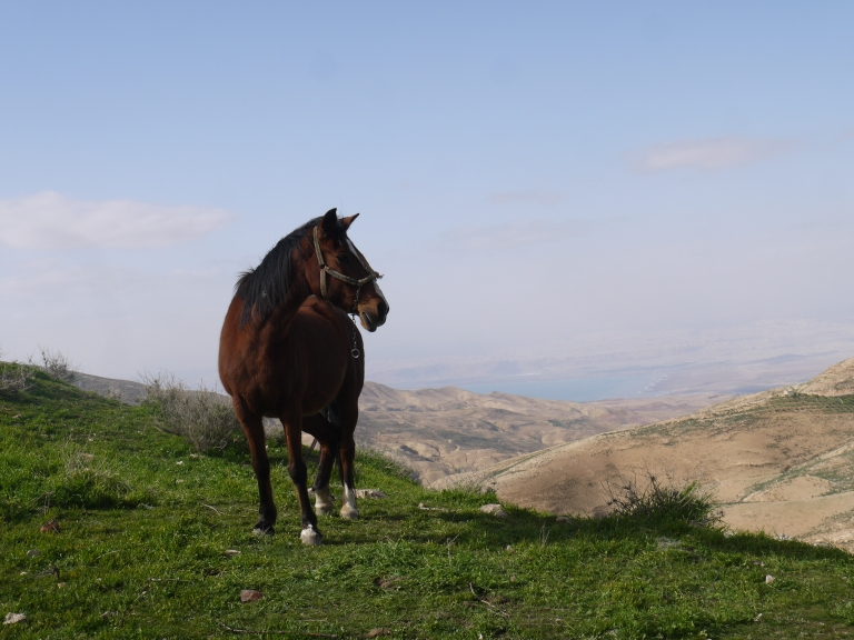 A horse with the promised land - Travellingminstrel #