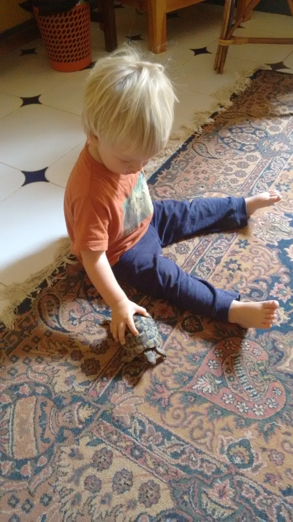 Jed with the tortoise - Travellingminstrel #
