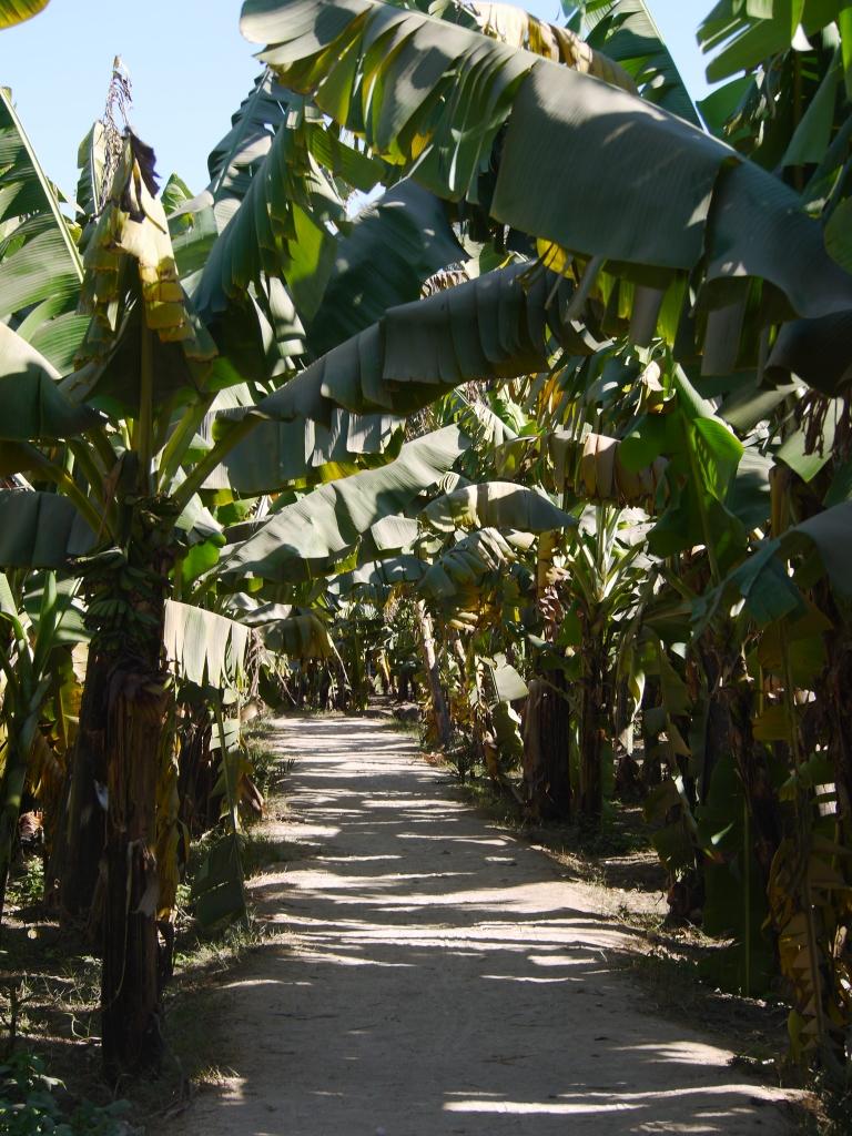 Banana island - Travellingminstrel #
