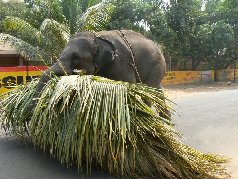 Elephant - Travellingminstrel #
