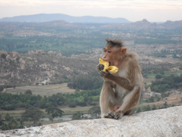 Up on Monkey temple - Travellingminstrel #