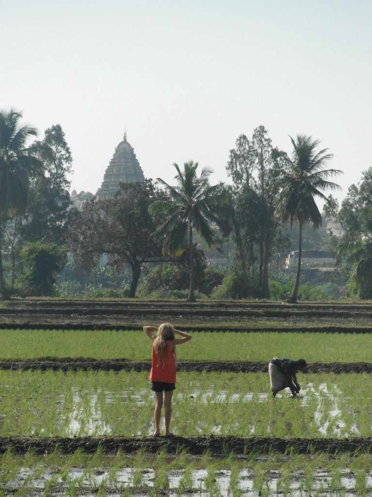 Rice fields - Travellingminstrel #