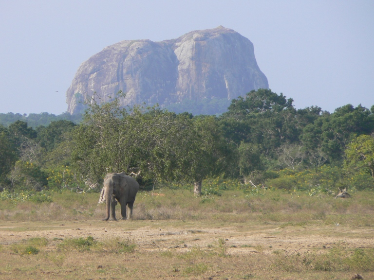 Wild Elephant at Elephant rock - Travellingminstrel #