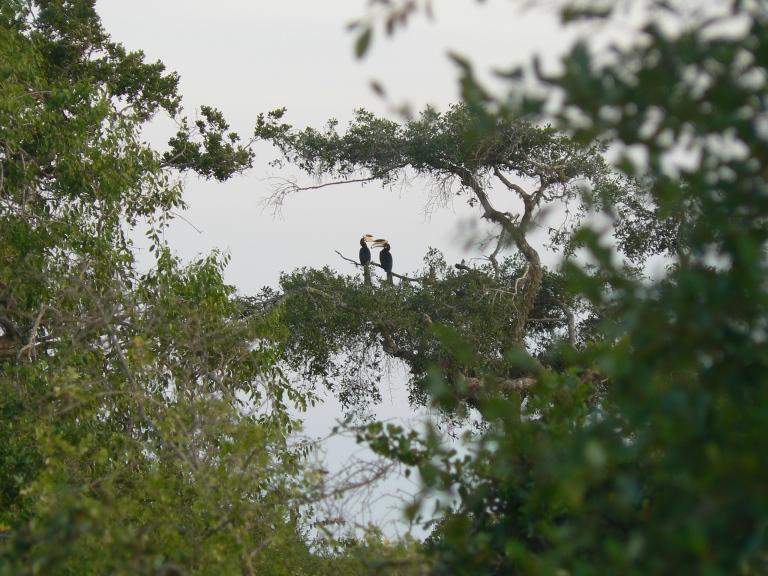 Toucan - Travellingminstrel #