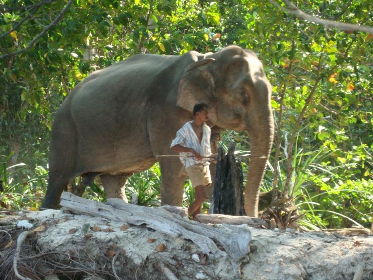 Elephant - Travellingminstrel.com #